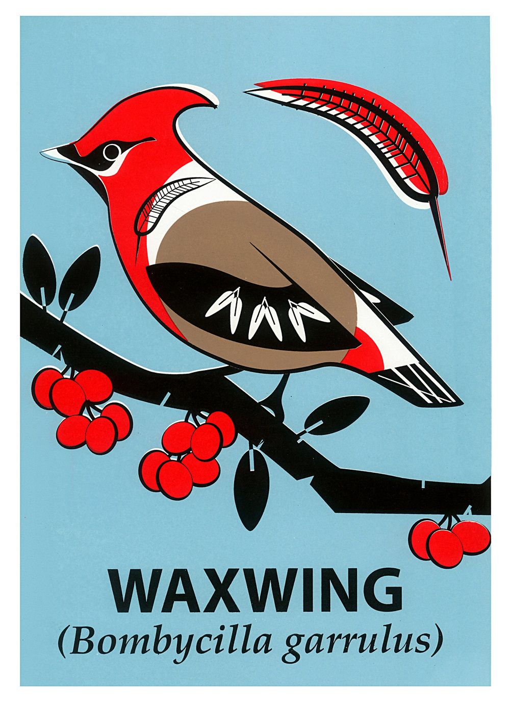 Limited Edition Waxwing Screenprint