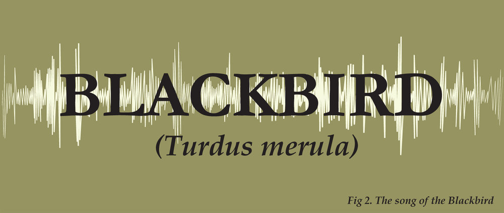 The Song of the Blackbird