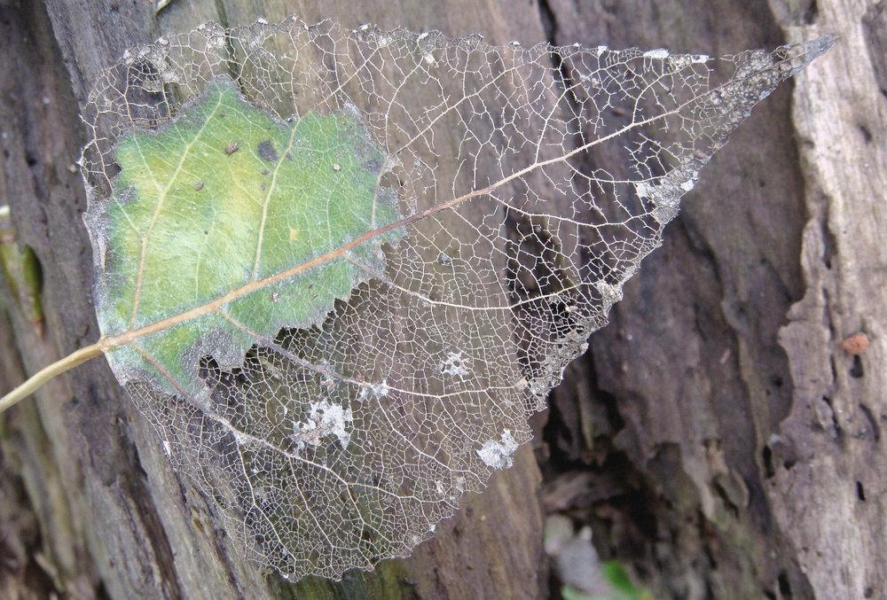 Intricacies-of-Nature-FI.jpg