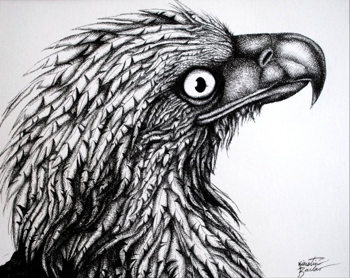 Eagle   | Pen & Ink