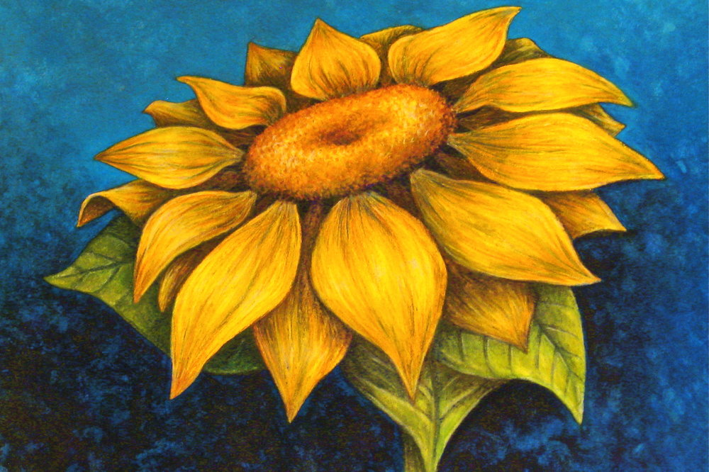 Sunflower   | Watercolor Pencil