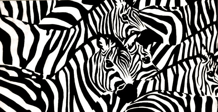 Zebras   | Colored Pencil