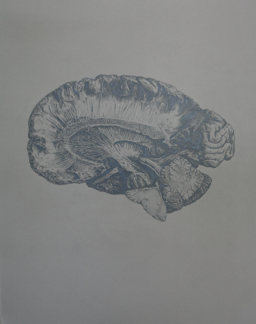 Mind and Specimen (Study no. 3)
