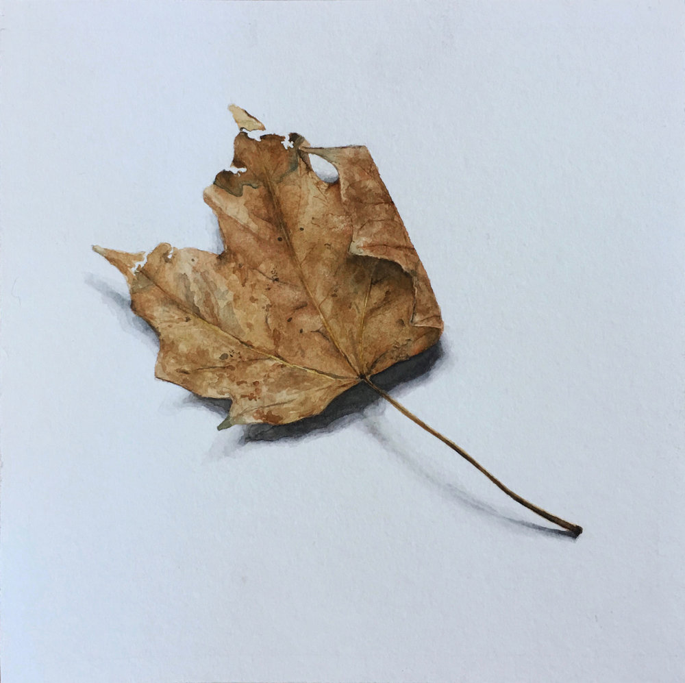"""portrait of a dying leaf  8""""x8""""  watercolor on paper"""