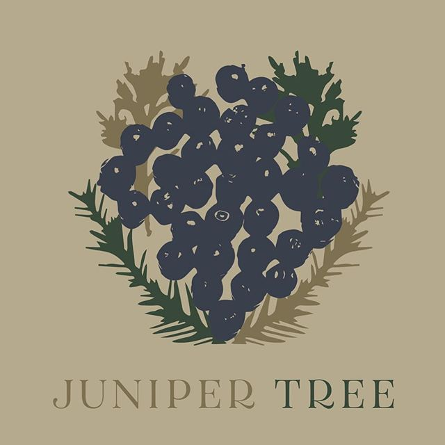 My husband Taylor and I put a new name to the music we make together, and I made a graphic as our introduction! Here's to fresh things. @junipertreemusic ☺️