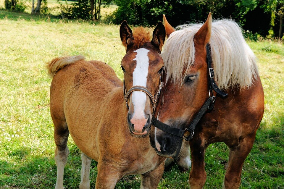 horses cuddling (1).jpg