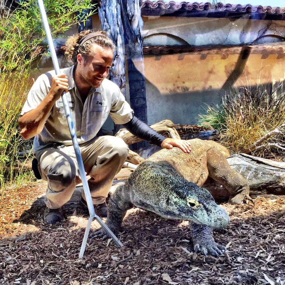 Me and my good friend Sunny, a 9 ft and 180 lb Komodo dragon:) (2013)
