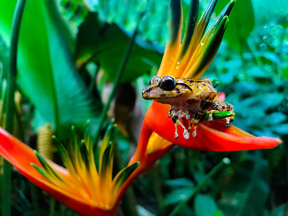 flower_frog_-.jpg