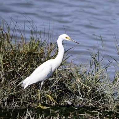 white-bird_Bedwell.jpg