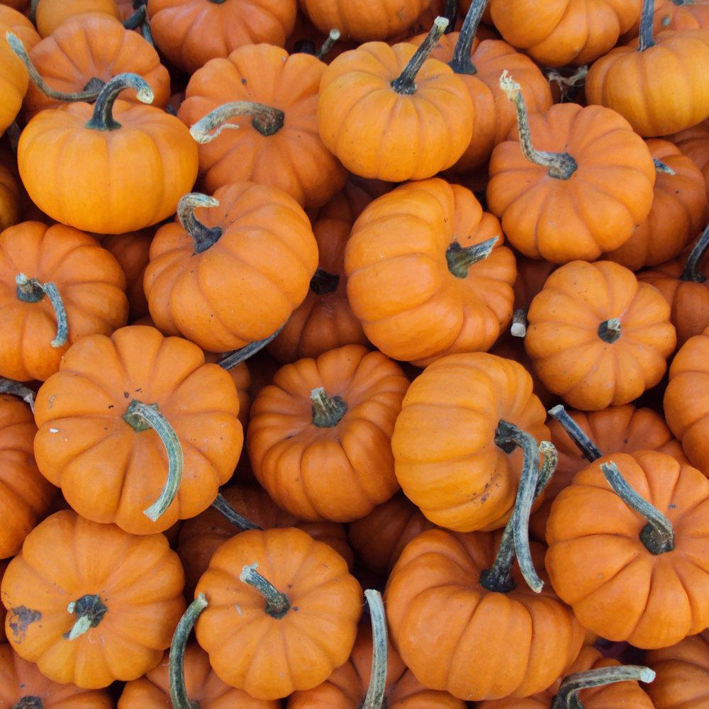 mini-pumpkins-890x890@2x.jpg
