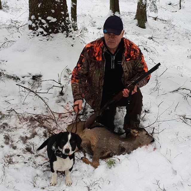 Kramar ur det sista av jakten med löshund för denna säsong. Ett ligger Kiwi släppt igen. #geitmyraskiwi #dreversåklart #spårsnö