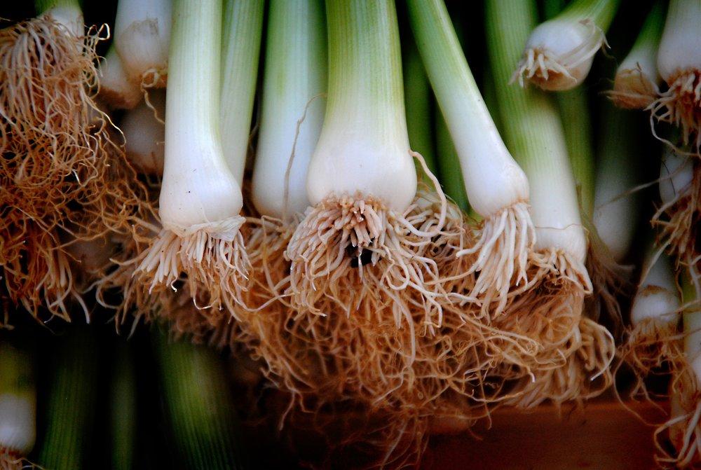 Green Onions/Scallions