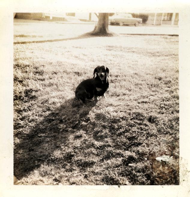 My first dog Catherine (Dachshund), 1970