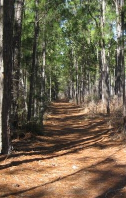 A walk through Big Thicket.