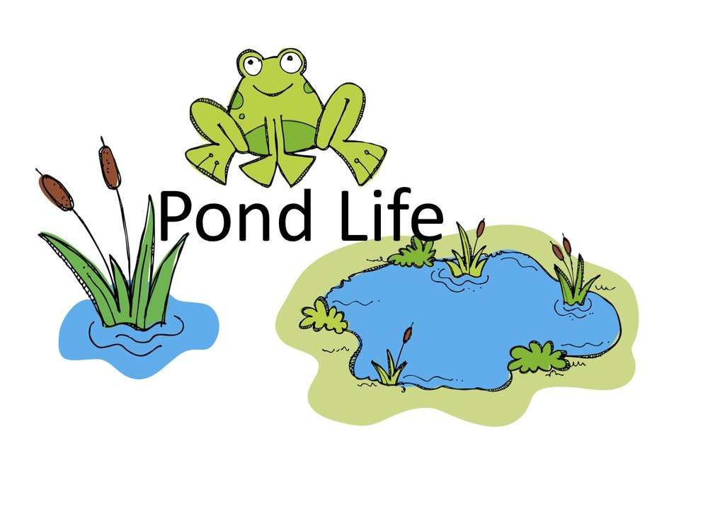 Unit 5: Pond Life - Coming soon! Available Saturday, October 21