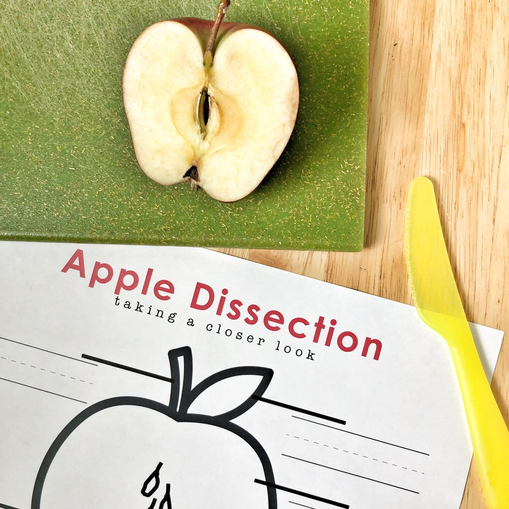 apple dissection2.jpg