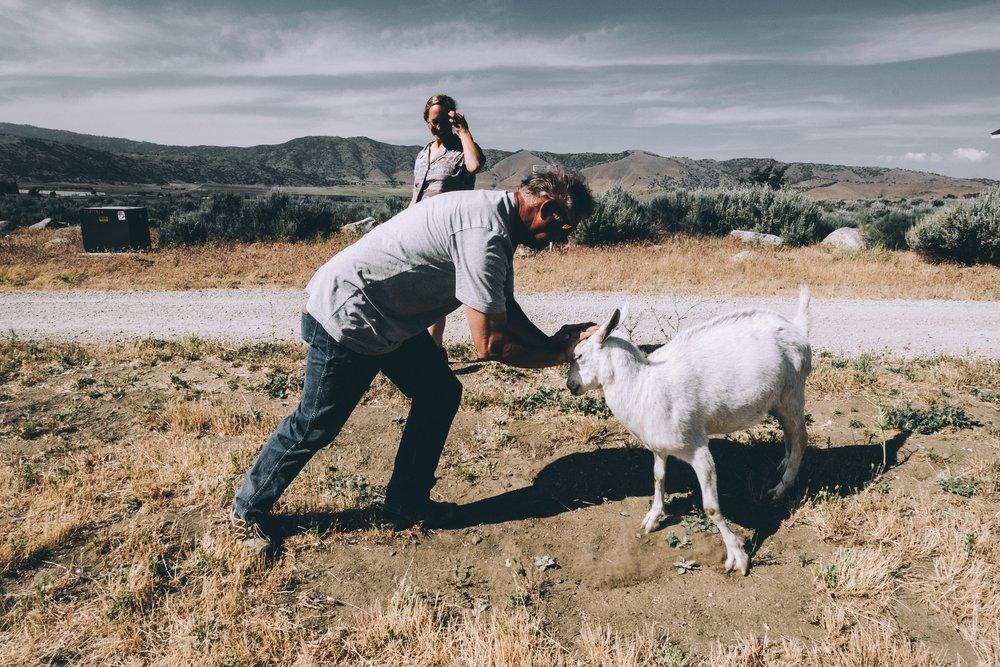 Jim wrestling his pet goat, Gita.