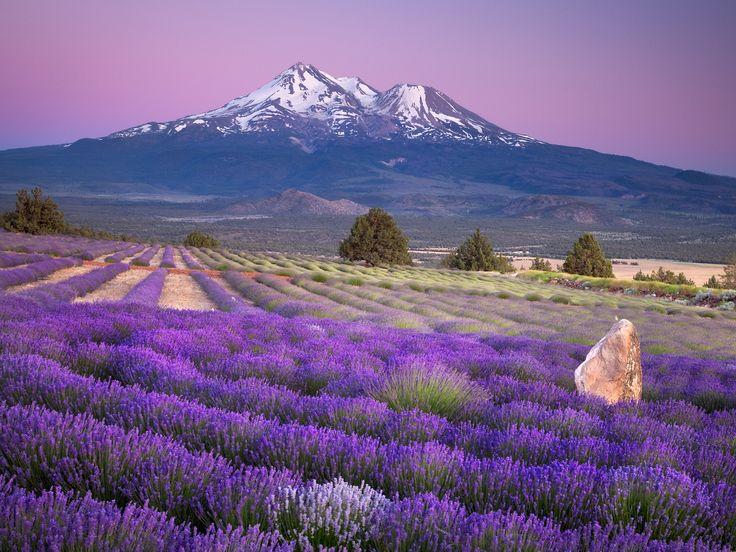 Concious Feminine Leadership - Mt. Shasta Retreats