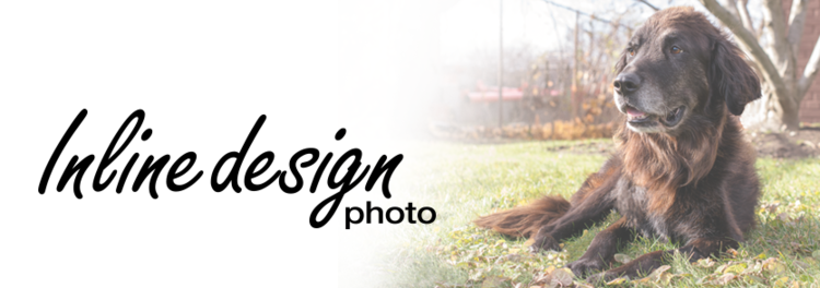 Toronto GTA Dog and Portrait Photographer