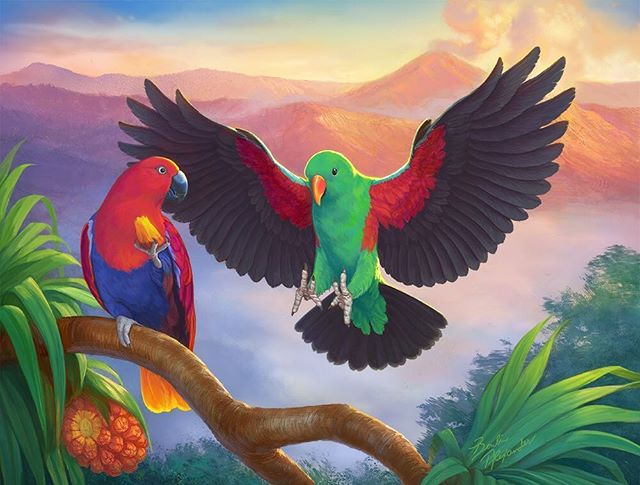 """Here's the 2nd bird food packaging illustration. The male Eclectus Parrot is about land on a branch next to a female as she is eating a pandanus fruit. Plus, a smoking volcano and a sunrise in the background. This was quite a challenge! . Strangely enough, I feel like I can relate to this male bird whenever I find my wife snacking on something. """"Hey! Whatcha eating!?"""" I say as I glide gracefully down on to the couch next to her. . . . #illustration #coverart #packaging #artistoninstagram #art #instaartist #instaart #artoftheday #painting #digitalpainting #mixedmedia #digitalart #wildlife #rainforest #nature #ornithology #birds #parrot #ithacany #upstateny #NY #NYC #dreaming #wife #marriagelife #marriage #landscape #wings #food"""