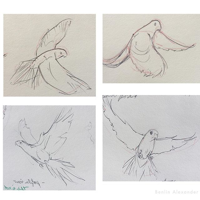 My process for creating a bird packaging illustration: As a general rule, I like to involve the client as much as possible from beginning to the end. . I start with gesture drawings of the bird, looking for the best poses. I like to read about the bird or study videos so I can find a pose that would best represent its character and personality. I assume that bird owners would connect with this when they see the final packaging. . I take the poses I like and create several black & white compositions showing how it will fit in the layout. If the layout isn't taken into consideration early, there's a good chance the impact of art will be lost and the designer will have to put the text on top of the art. In this case, the layout was changed by the end. . Once a compositions is selected, a final drawing is completed. Plus, a simple greyscale and color mockup are sent to the client. After approval, I start the final! . A few times during the rendering stage, I send the client a progress update, letting them know how it's going, and also letting them request changes if they catch something wrong. . And finally, we have a finished illustration that we can both be proud of! . . . #illustration #coverart #packaging #artistoninstagram #art #instaartist #instaart #artoftheday #painting #digitalpainting #digitalart #conceptart #sketches #wildlife #rainforest #nature #ornithology #birds #parrot #ithacany #NY #NYC #landscape #birdfood #birdsofinstagram #vetafarm #Tbt #process #raleigh