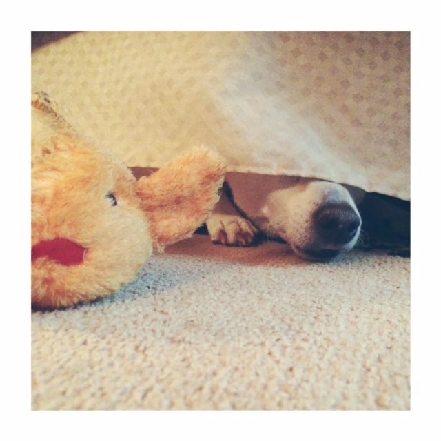 Little dog makes himself at home