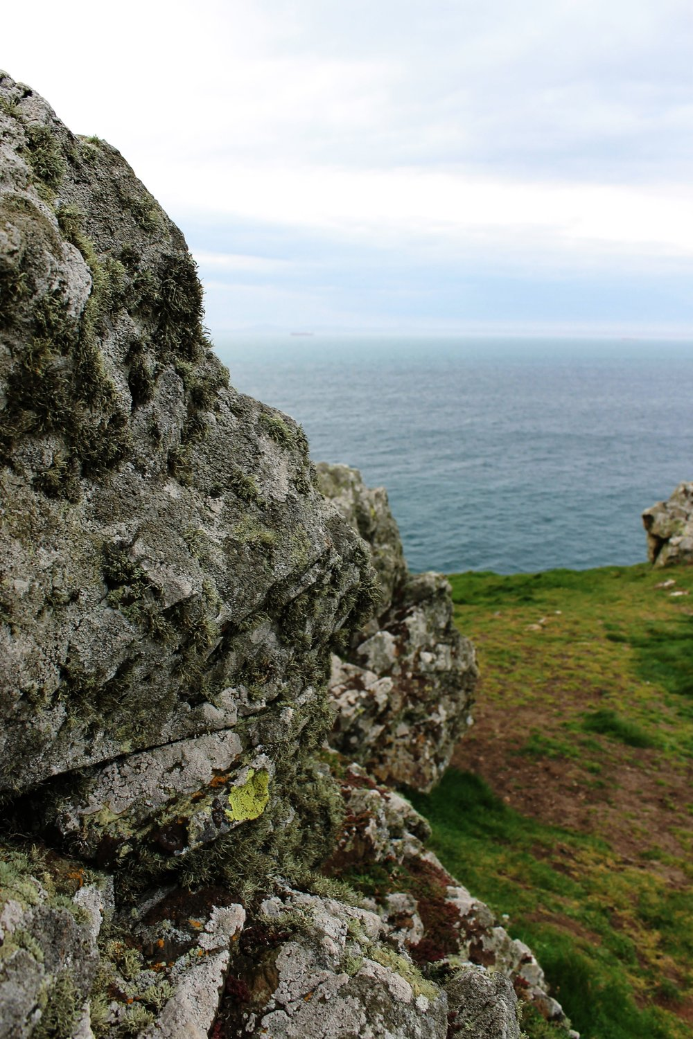 An array of lichen species on the cliff edge near Martin's Haven