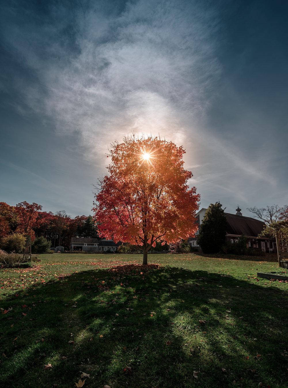 bayard_cutting_tree_autumn.jpg