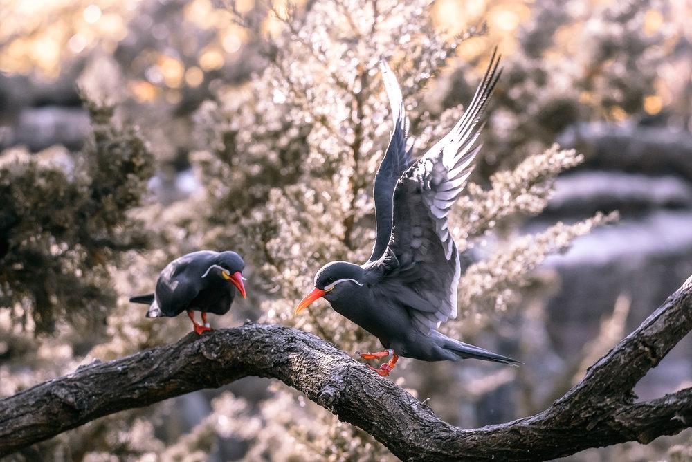 Turn_birds_BX_Zoo.jpg