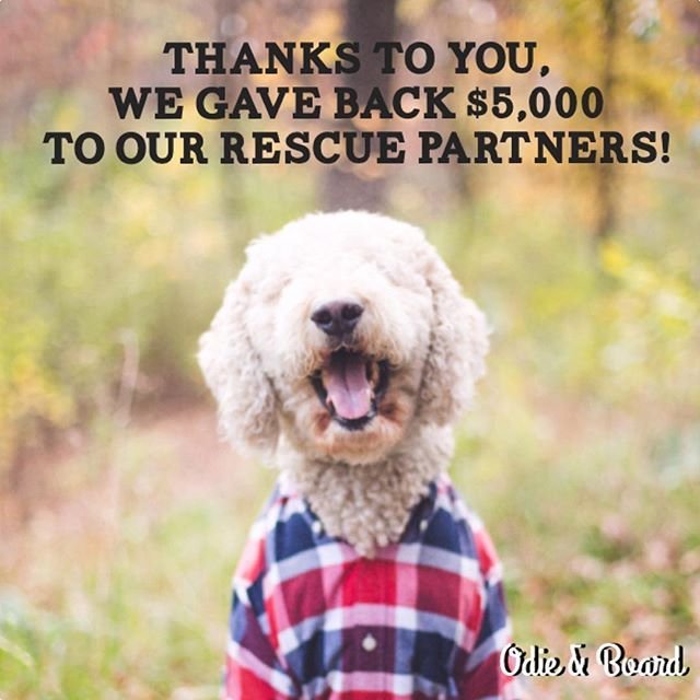 Thank you for supporting Odie & Board and our Rescue Partners in 2017! . . #odieandboard