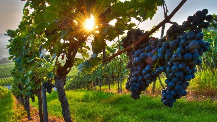 wine tours.jpg