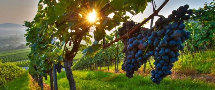Wine Tours FVG