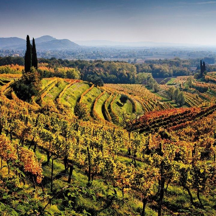 sqj_1510_venice_wine_02.jpg__800x600_q85_crop.jpg