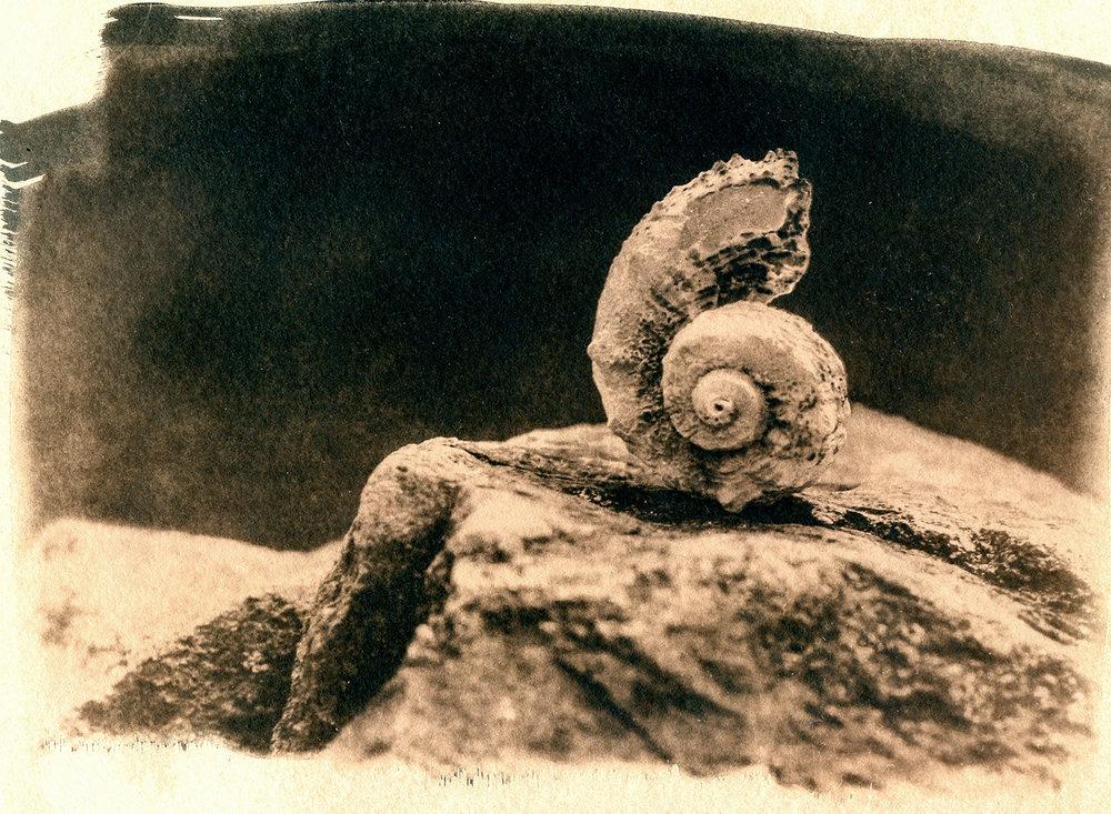 Shell #34