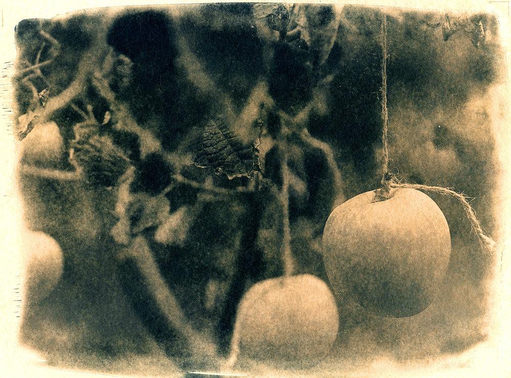 Apples #3
