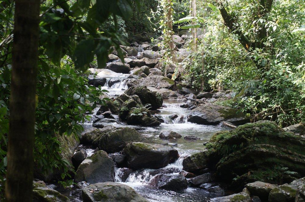 El Yunque .JPG