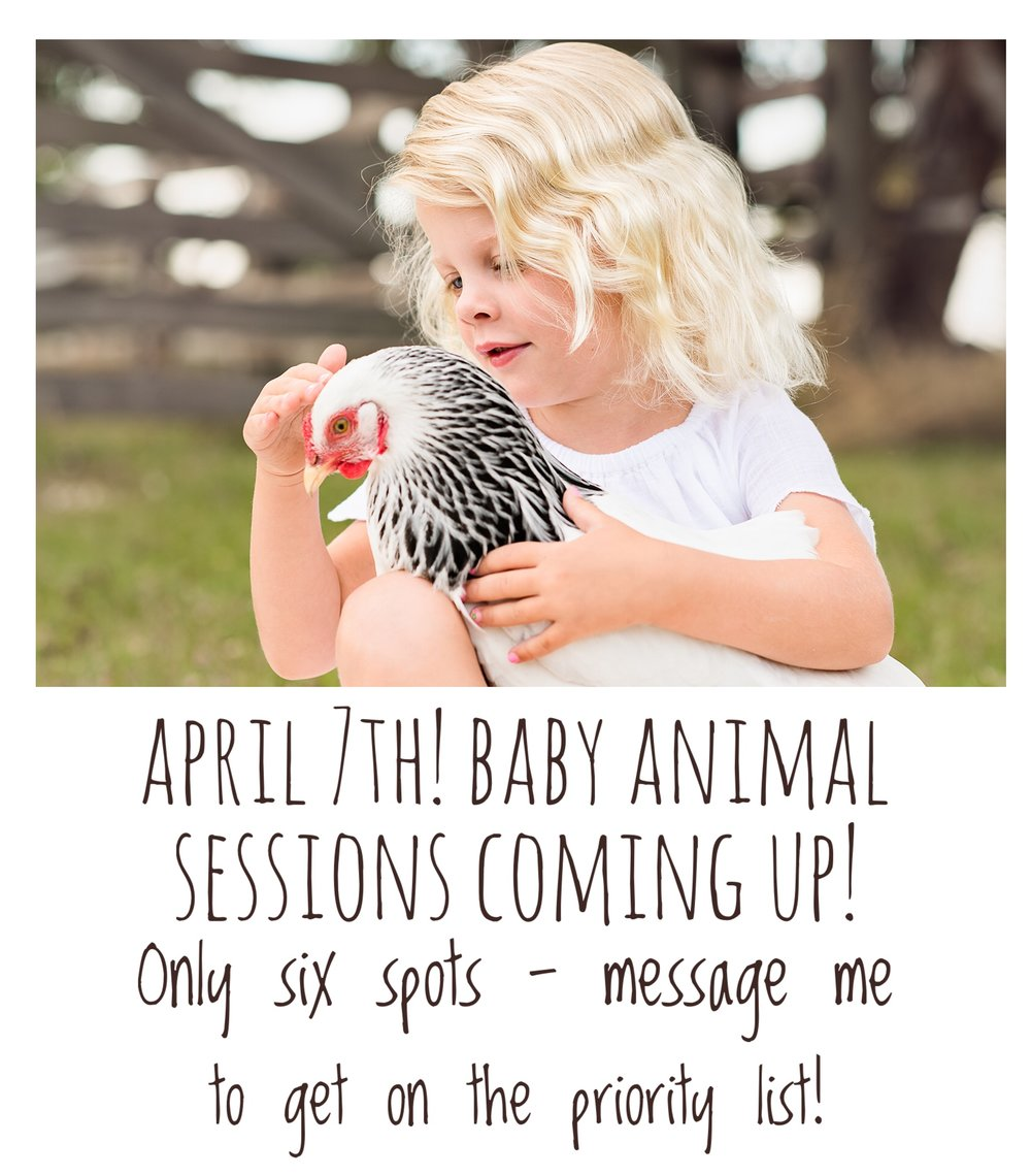 Baby-Animals-Spring-Photo-Sessions.jpg