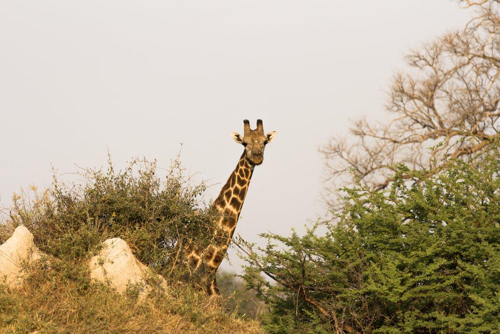 102 Botswana 063.jpg