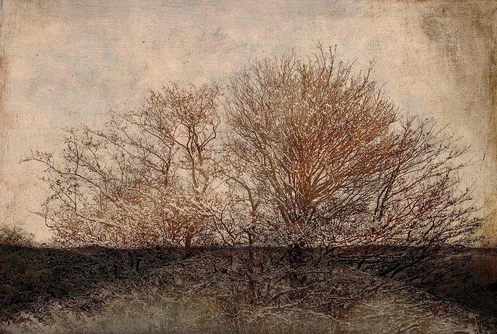 """""""Árbol surgiendo / Emerging tree"""""""
