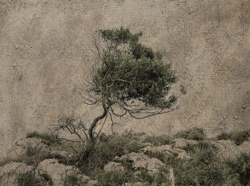 """Árbol de viento / Wind tree"""