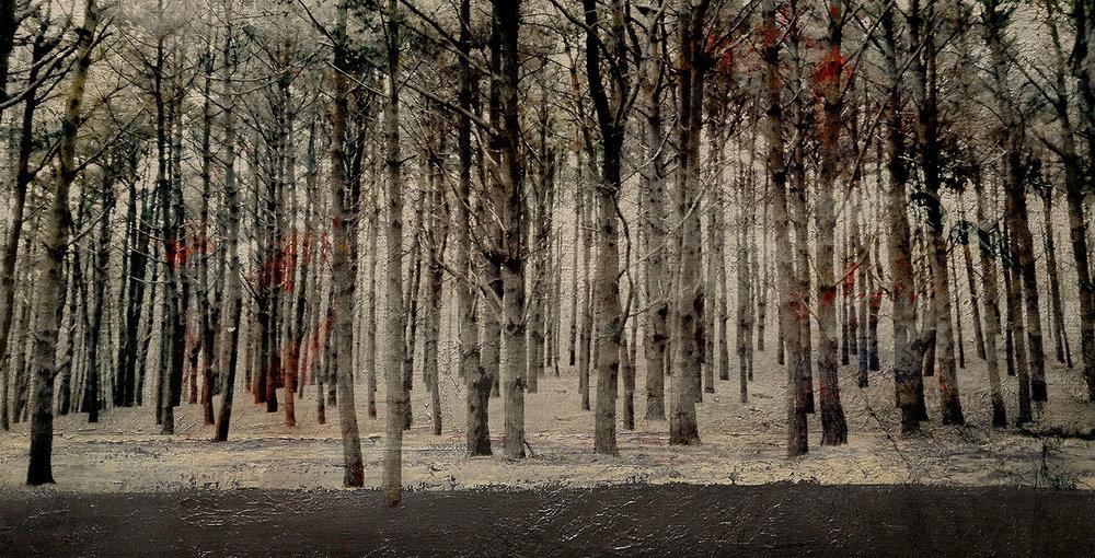 """""""Bosque de Ferrolterra / Ferrolterra forest"""""""