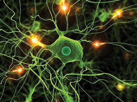neurons_firing.jpg