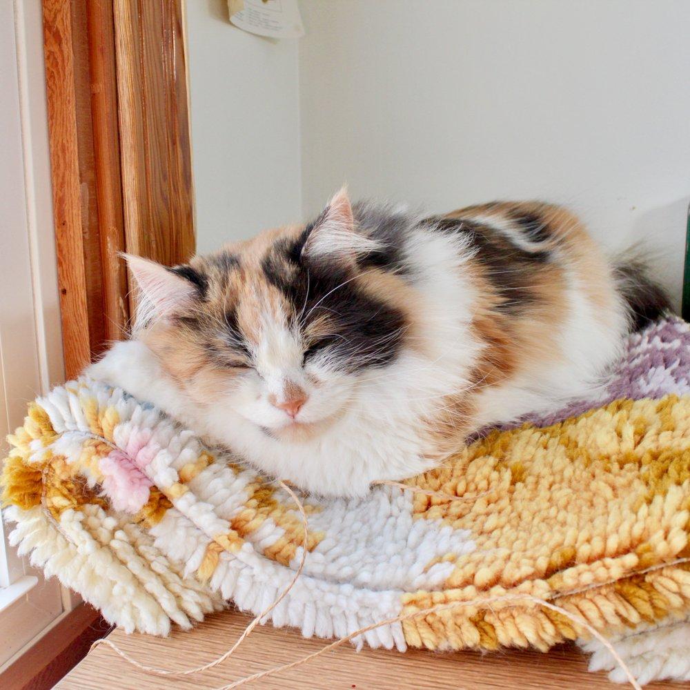 Scout Paper Studio Cat.jpg