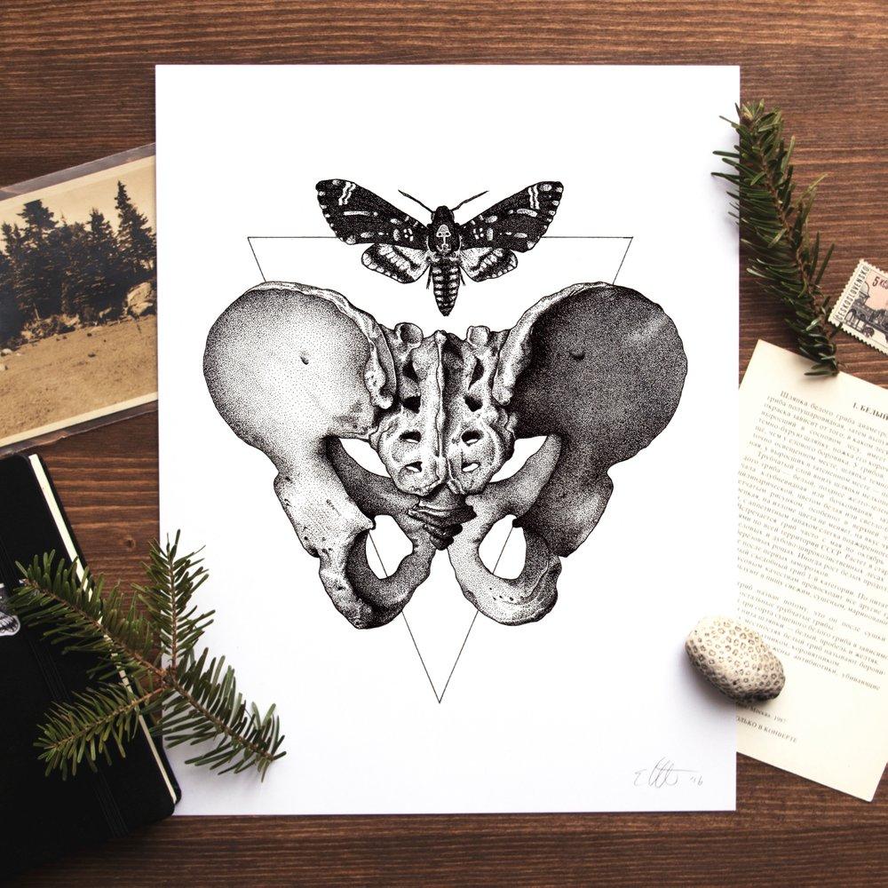 Pelvis_Moth_Print.jpg