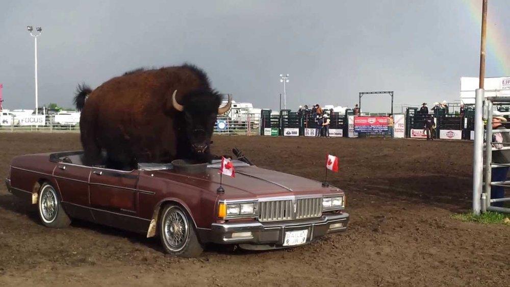 Bison Car.jpg