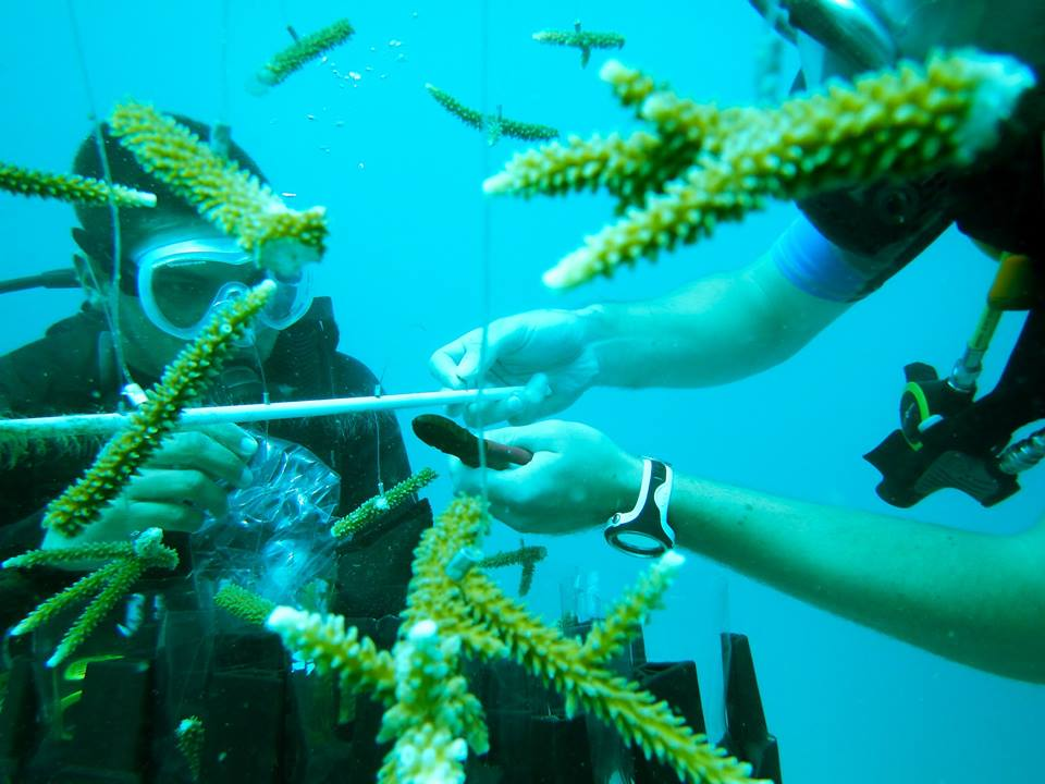 Coral Fragments Prepped For Growth