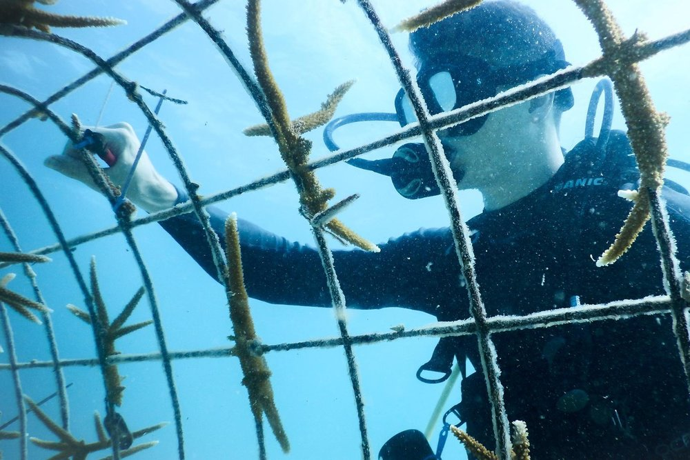 Jeremy Raynor tending the AIEF Staghorn Coral Nursery.  Photo Provided by Amiga Island Ecological Foundation, Haiti