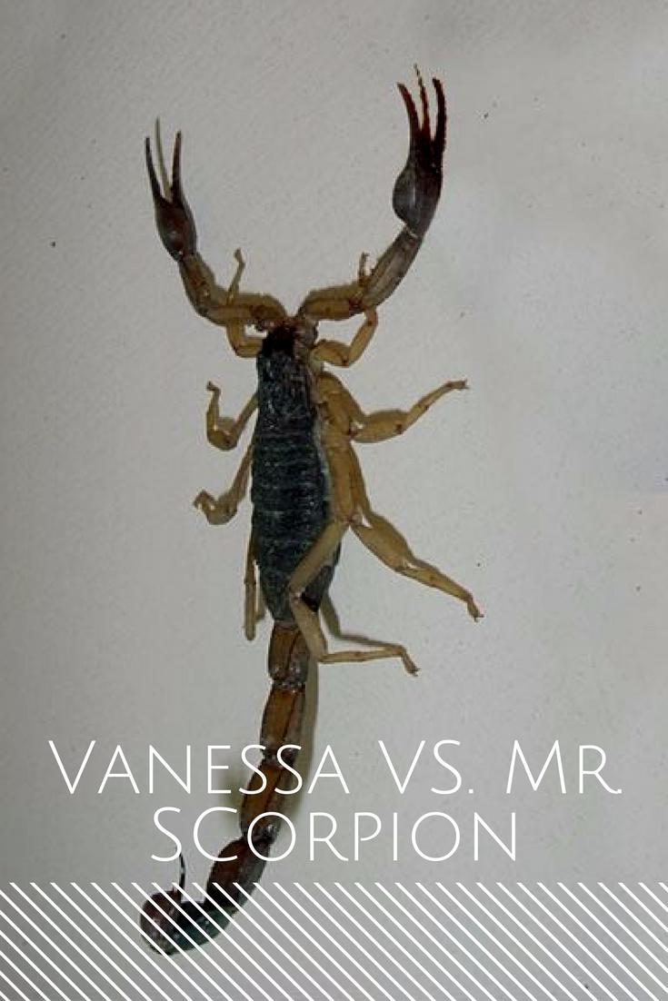 Sucio romano Hassy  The Great Scorpion Battle of '17 — Nik & Vanessa Take The World