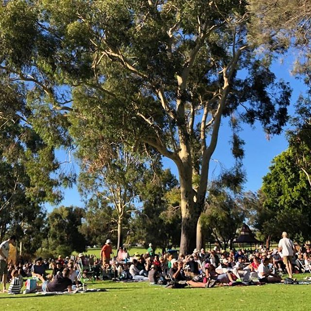 ⠀ Fabulous photo from @penny_taylor_subiaco_mayor of the free sunset@subi concert yesterday. If you missed it there is another one happening this Sunday with @prooftheband singing smash hit songs across the decades between 5-7pm at Lake Jualbup. ⠀ .⠀ .⠀ .⠀ @seesubiaco #spiritevents #pertheventmanagement #pertheventmanager #cityofsubi #cityofsubiaco #parksofsubiaco #freeconcert  #sundayvibes #perthisok #perthlivemusic #lovewhereyoulive #forsubiaco  #lovesubiaco #lovesubi #Subiaco #Daglish #Jolimont #ShentonPark #community  #seesubiaco #aussiesummer #lovelife #picnicstyle #perth