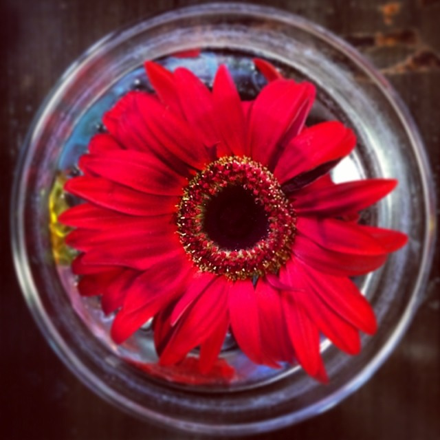 redflora.jpg